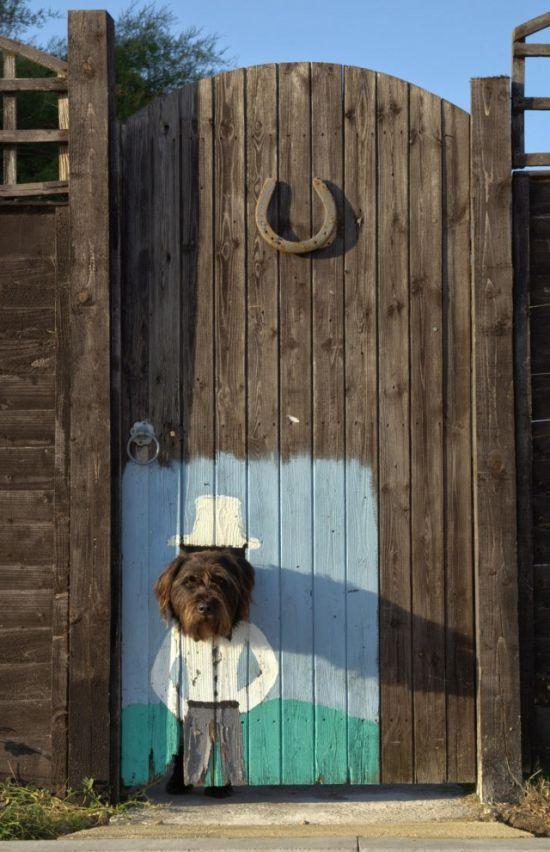building a dog fence